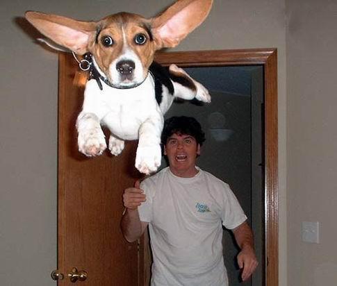 imagenes chistosas de perros para whatsapp1