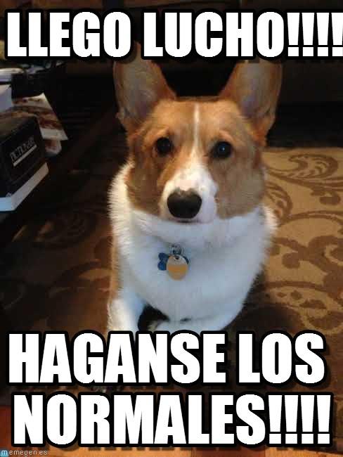 memes de lucho el perro9