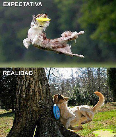 memesdeanimales26
