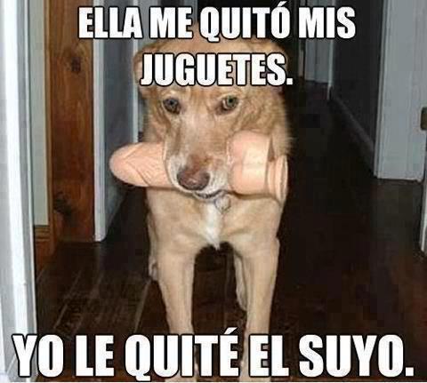 memesgraciososdeperros9