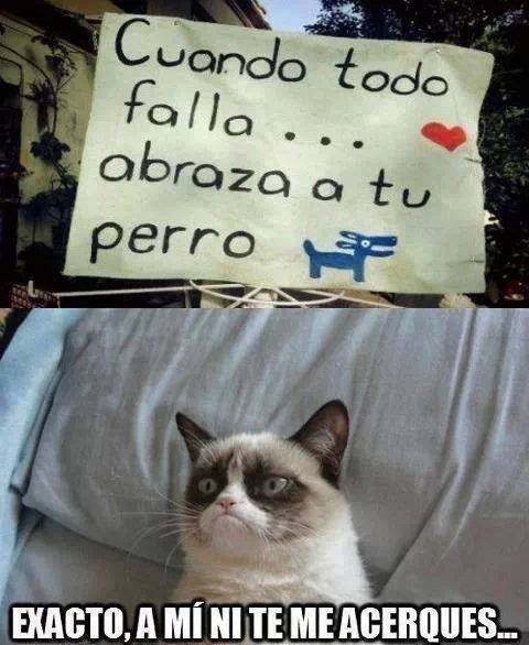 memeschistososdegatos17