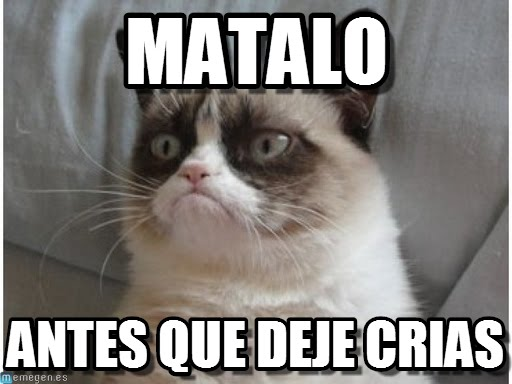 memeschistososdegatos24