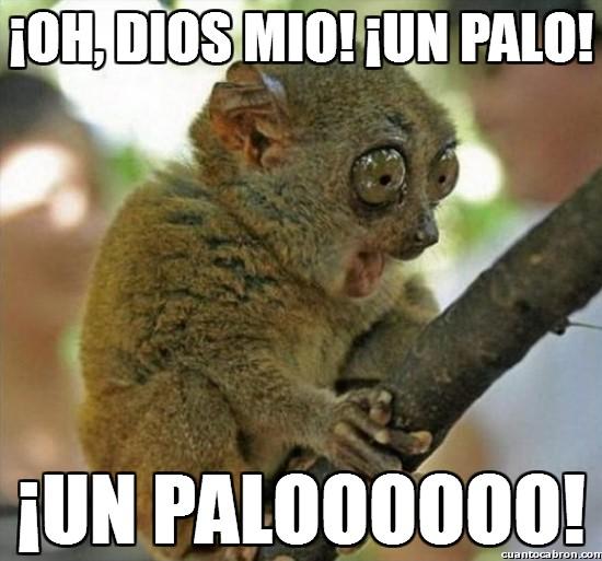 Memes Chistosos De Monos Imagenes Chistosas