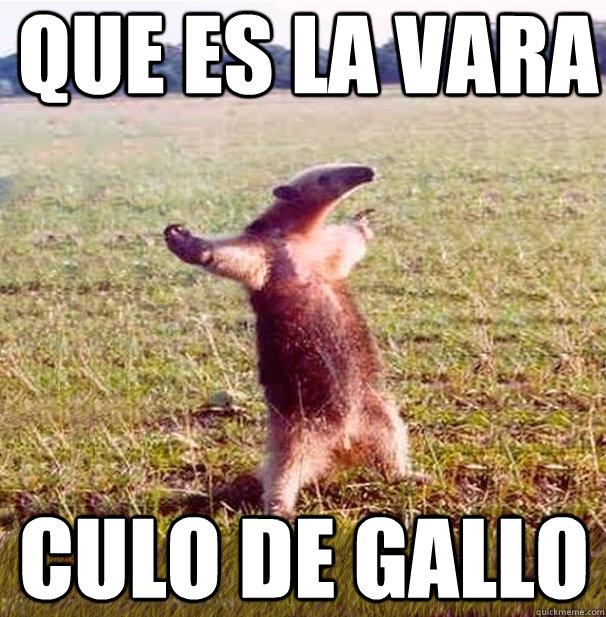 memes de gallos11