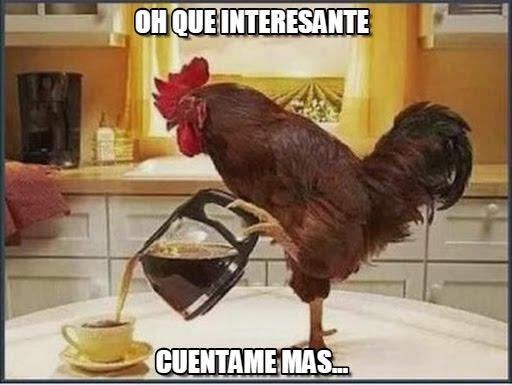 memes de gallos2