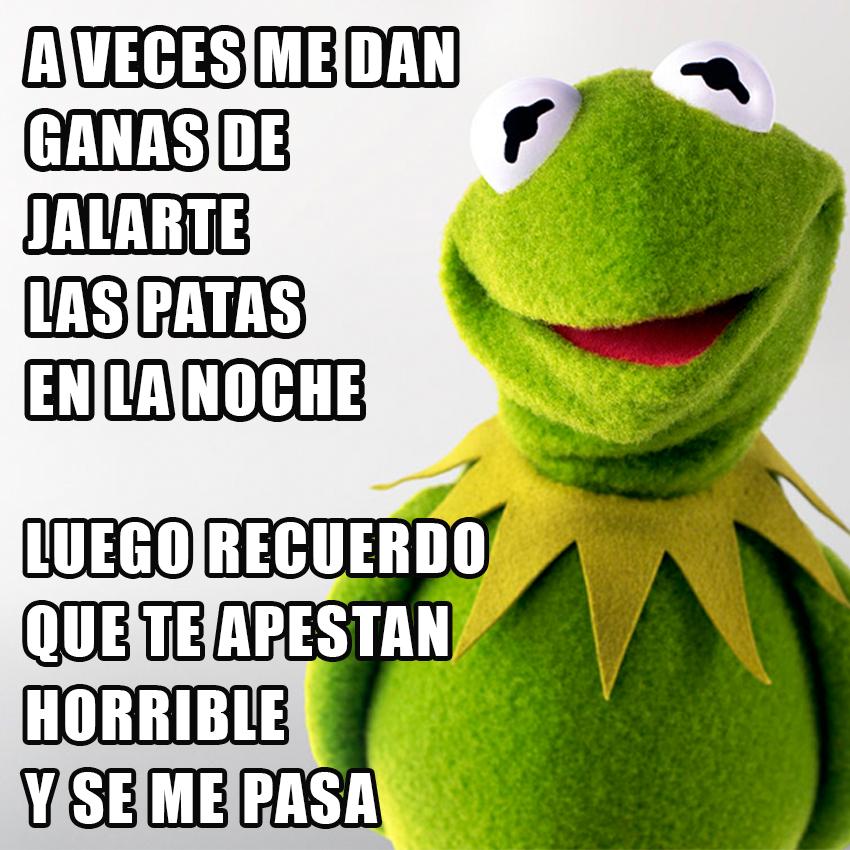 memesgraciososdelarana4