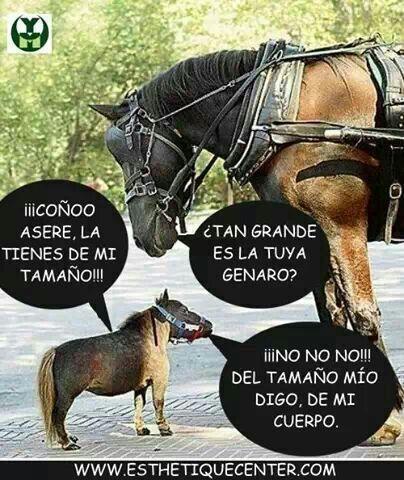 memes de caballos1