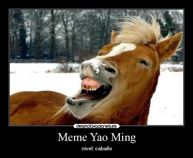 memes de caballos11