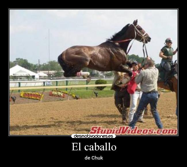 memes de caballos13