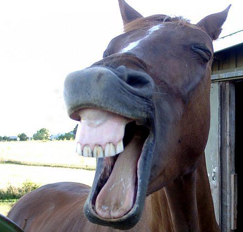 memes de caballos14