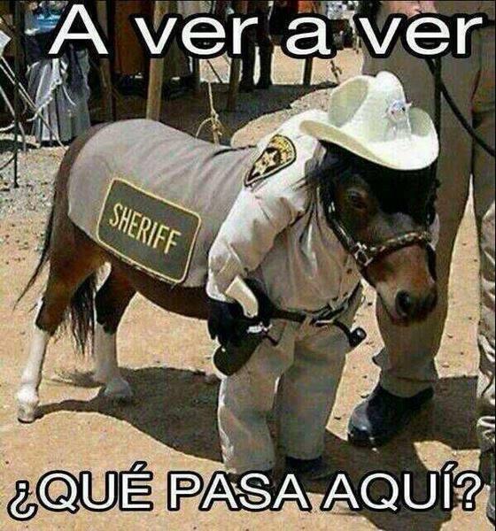 memes de caballos2