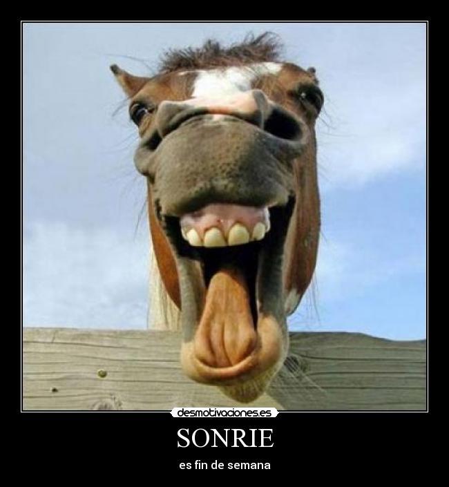memes de caballos6