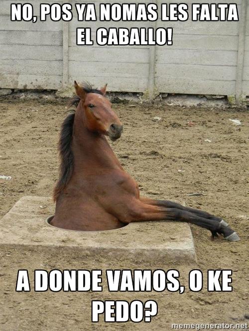 memes de caballos8