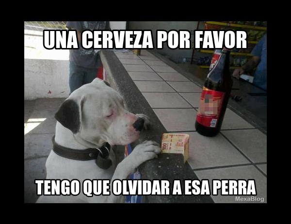 Memes de Cerveza - Imagenes chistosas