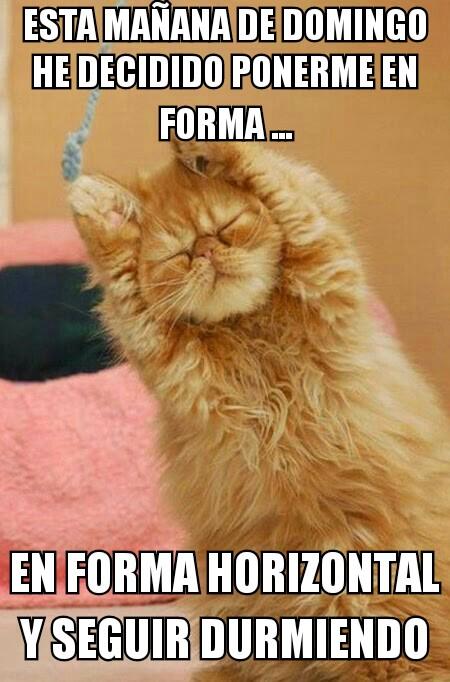 Memes De Domingo Imagenes Chistosas