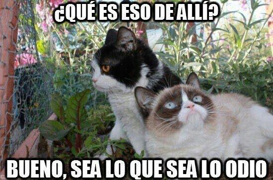 memes de grumpy cat1