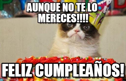 memes de grumpy cat11