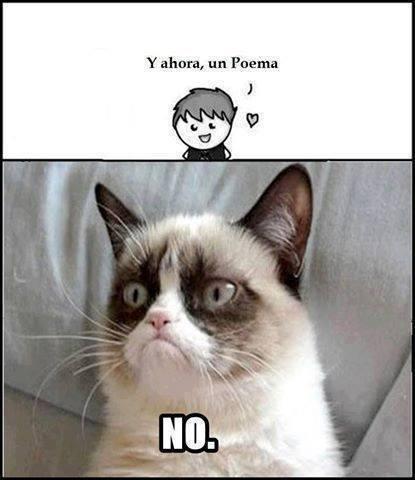 memes de grumpy cat12
