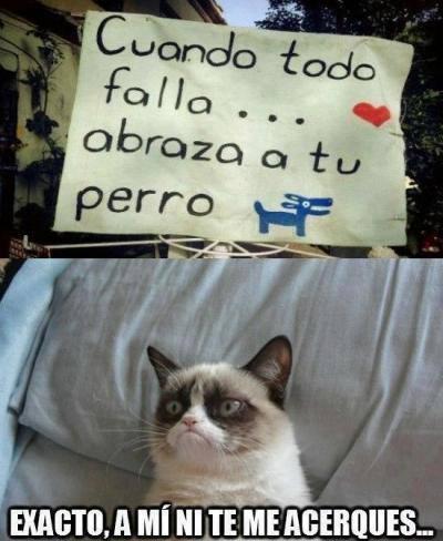 memes de grumpy cat14