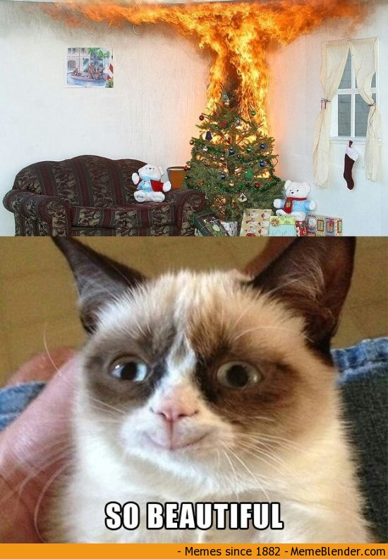 memes de grumpy cat16