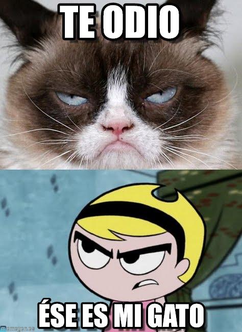 memes de grumpy cat19