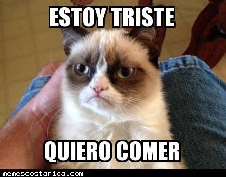 memes de grumpy cat2
