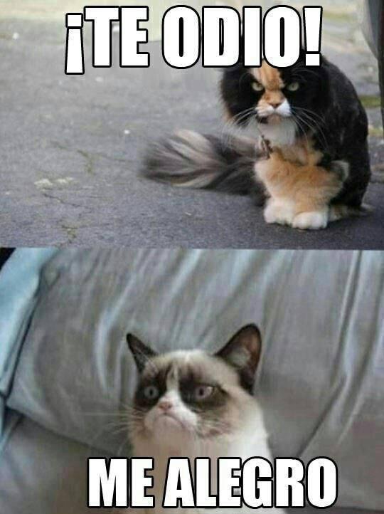 memes de grumpy cat4