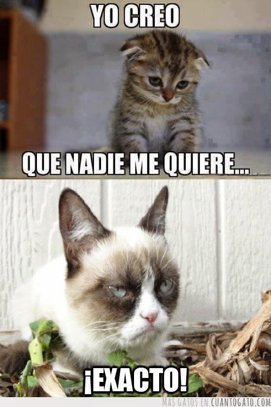 memes de grumpy cat5