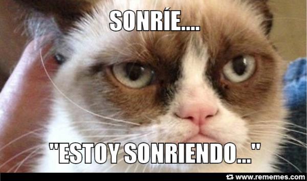 memes de grumpy cat6