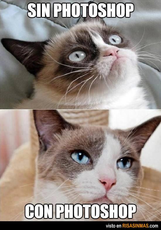memes de grumpy cat7