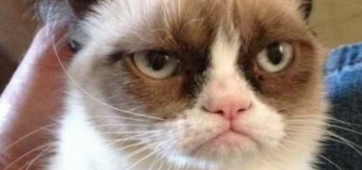 memes de grumpy cat8