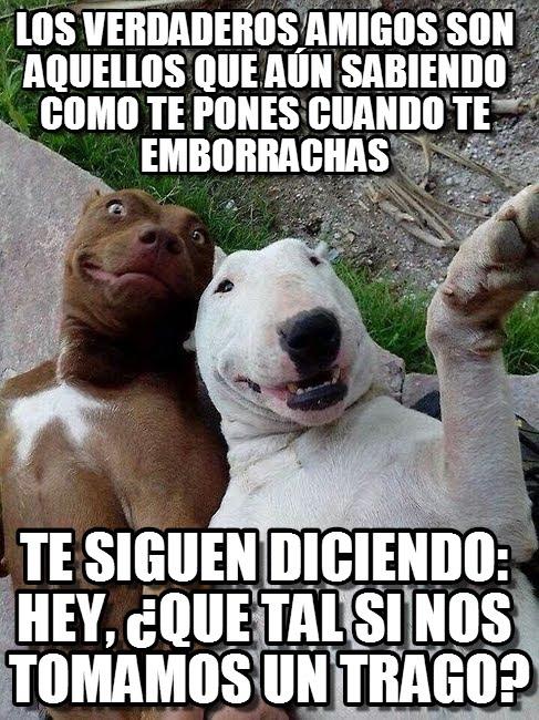 memes de amigos3