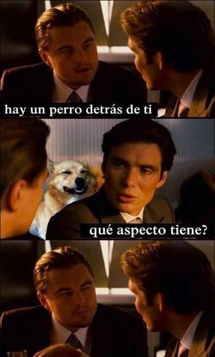 memes de leonardo dicaprio14