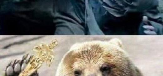 memes de leonardo dicaprio3
