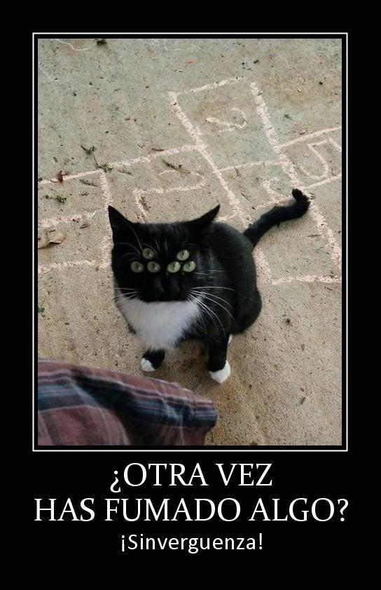 60 Imágenes Memes Y Frases Chistosas Imagenes Chistosas