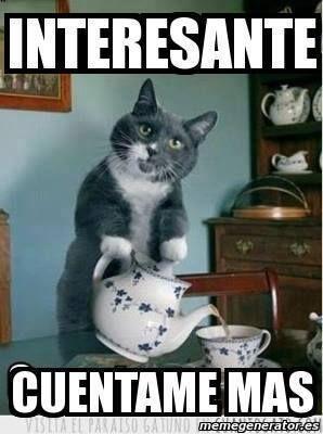 memes de gatos10