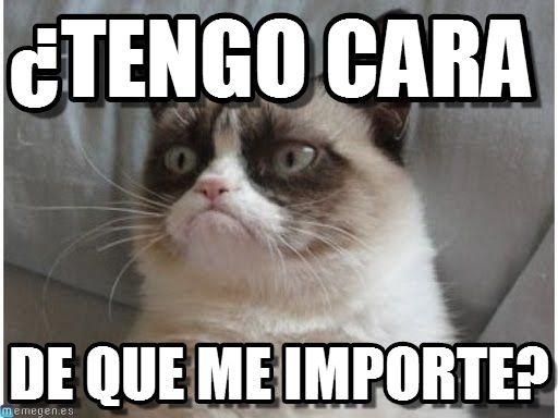 memes de gatos11