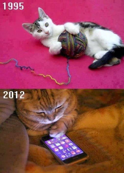 memes de gatos12