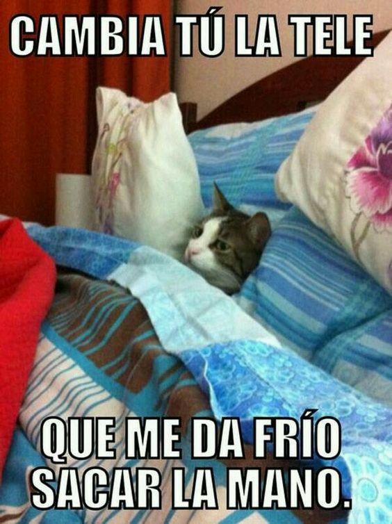 memes de gatos13
