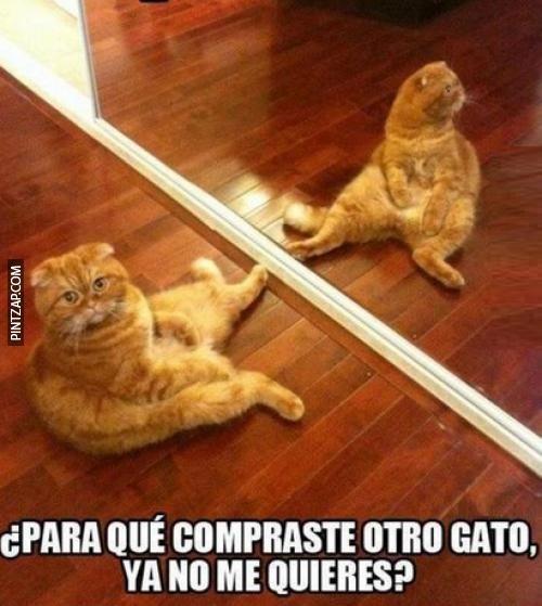 memes de gatos15