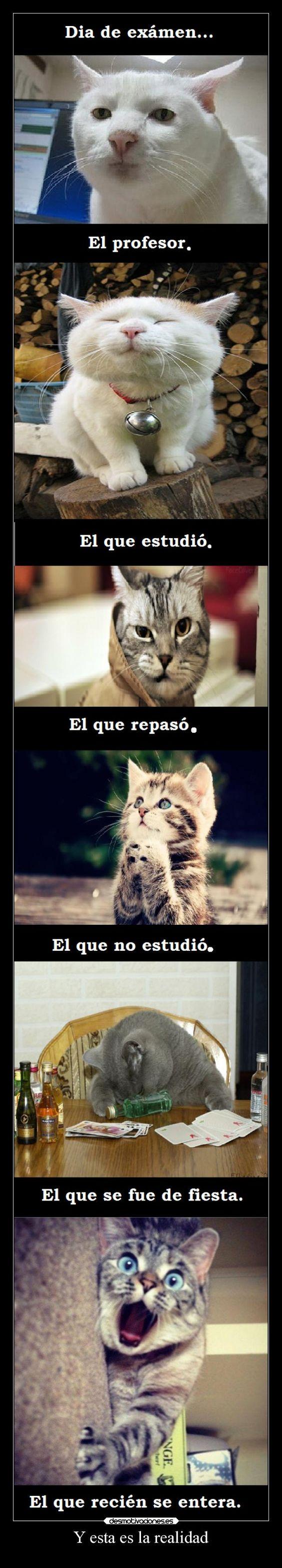 memes de gatos16