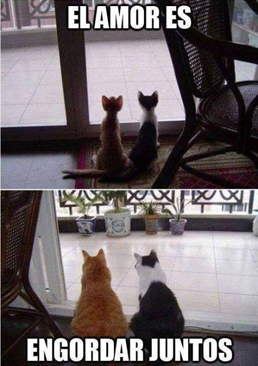 memes de gatos19
