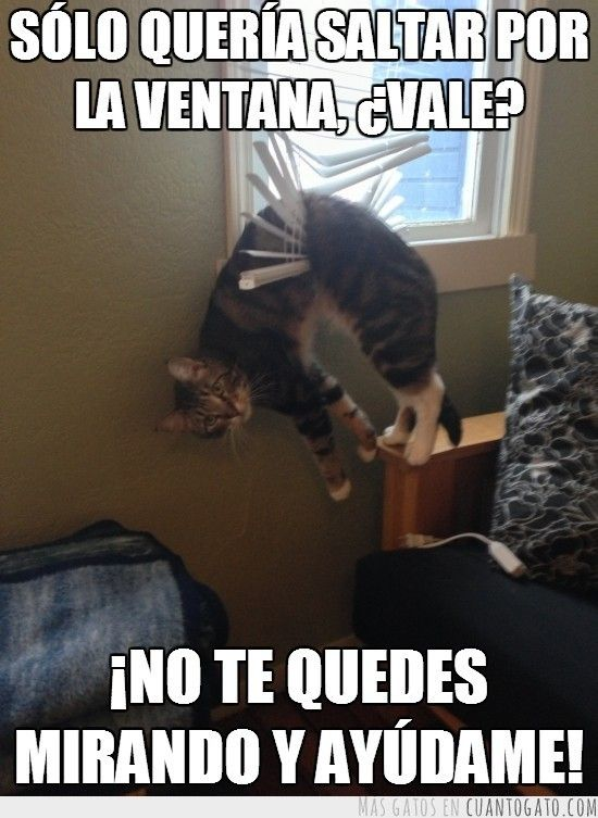 memes de gatos21