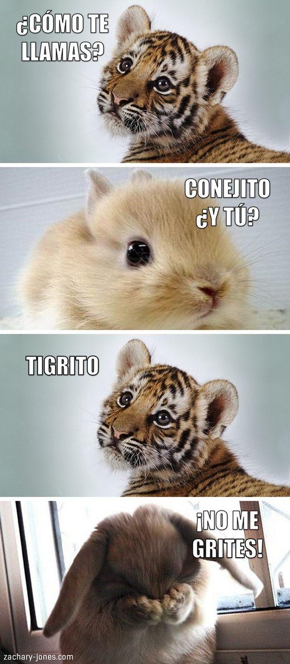 memes de gatos22