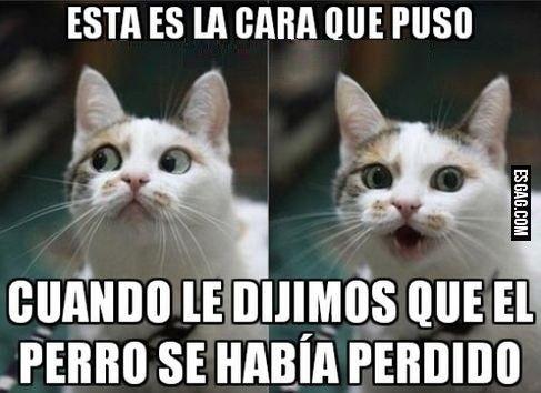 memes de gatos23