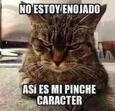 memes de gatos24