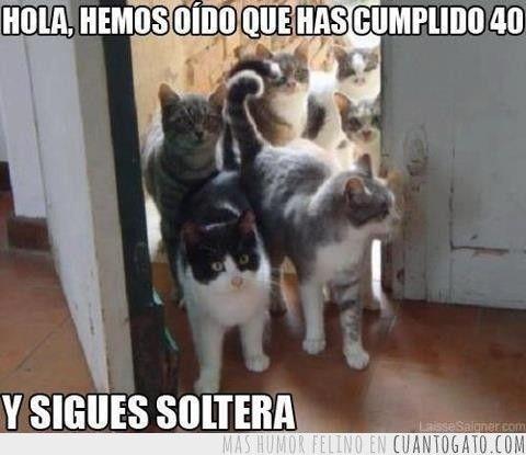 memes de gatos25