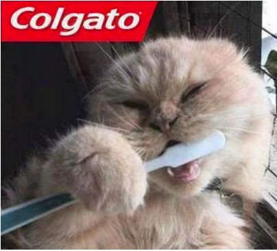 memes de gatos26