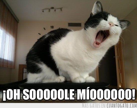 memes de gatos27