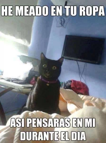 memes de gatos28
